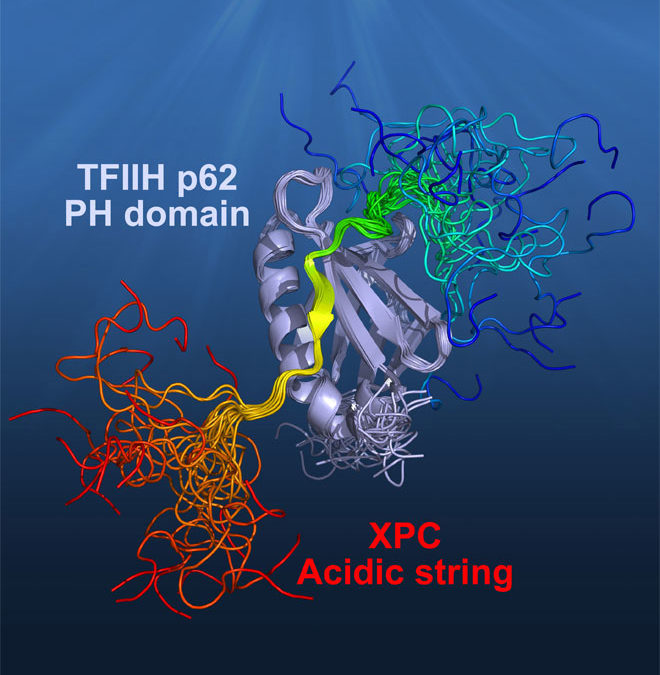 Mechanism of TFIIH Recognition by Acidic String of Nucleotide Excision Repair Factor XPC