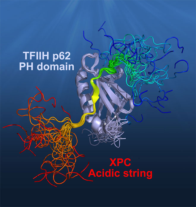 Mechanism of TFIIH Recognition by the Acidic String of the Nucleotide Excision Repair Factor-medicine innovates
