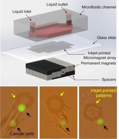 inkjet-print-micromagnet-array-glass-slides-immunomagnetic-enrichment-circulating-tumor-cells-medicine-innovates