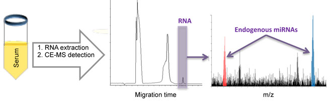 detection of endogenous MicroRNAs in cancer serum by capillary electrophoresis-mass spectrometry- Medicine Innovates