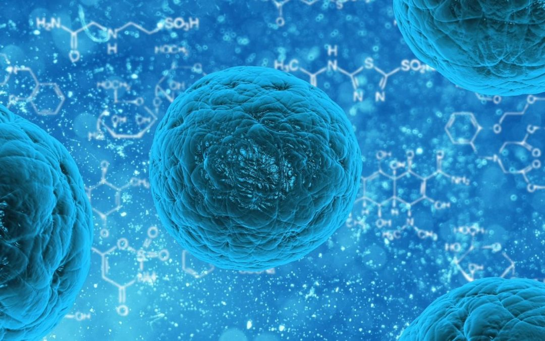 Highly Engraftable Hematopoietic Stem Cell