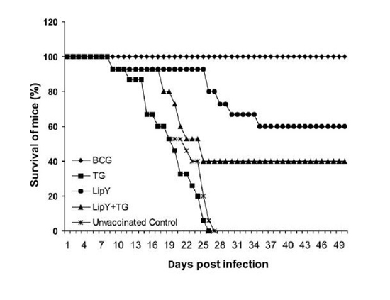 Bettering BCG vaccine: LipY, an important antigen to boost BCG vaccine to counter active and latent infections of M. tuberculosis - Medicine Innovates