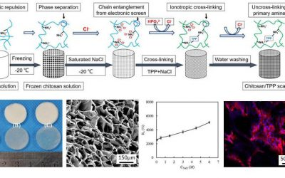 Porous scaffolds with mechanical-biological properties balance for bone tissue engineering