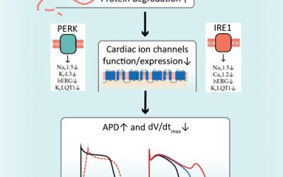 Activation of the Unfolded Protein Response Downregulates Cardiac Ion Channels in Human Induced Pluripotent Stem Cell-Derived Cardiomyocytes
