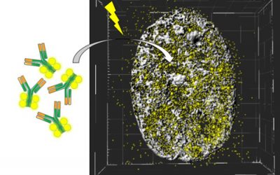 High Resolution Imaging of native transcription factors and histone phosphorylation