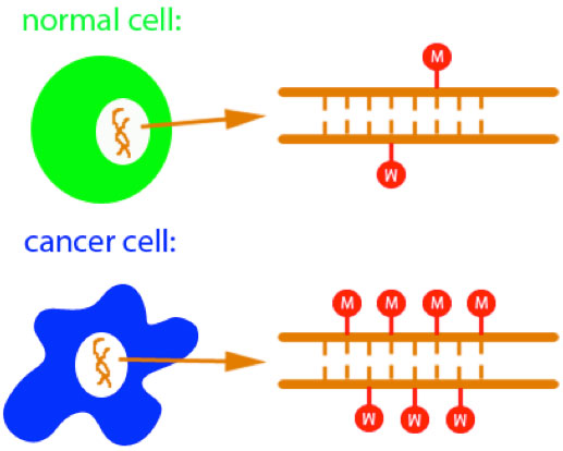 Highly-sensitive-detection-of-DNA-hypermethylation-in-melanoma-cancer--Medicine-Innovates