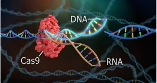 CRISPR Genome Editing Holds Back Triple-Negative Breast Cancer in Mice - Medicine Innovates