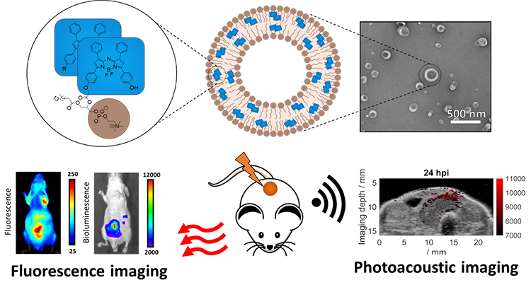 Stable J-Aggregation of an aza-BODIPY-Lipid in a Liposome for Optical Cancer Imaging - Medicine Innovates