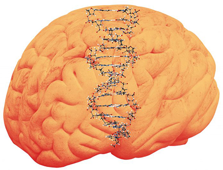 PSEN1 a New Alzheimer's Disease Biomarker Candidate Discovered in Peripheral Blood - Medicine Innovates