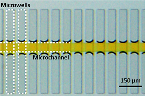 Airplug-assisted Biochip for Unbiased Multiplex Biosensing from Single T Cells - Medicine Innovates