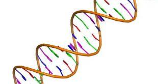 Developing a new gene-editing tool - Medicine Innovates