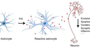 Reactive astrocytes-derived GDNF plays an important role in brain protection and improvement of long-term stroke outcomes in mouse model - Medicine Innovates
