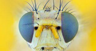 Drosophila as a high-throughput in vivo genetic model to study Antipsychotic drugs - Medicine Innovates