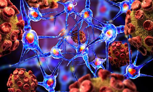 Human endogenous retrovirus expression damages brain development - Medicine Innovates