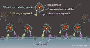 Development of Heterobivalent Theranostic Probes Having High Affinity/Selectivity for the GRPR/PSMA - Medicine Innovates