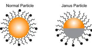 Bifunctional Janus Particle Probes to study phagocytosis - Medicine Innovates